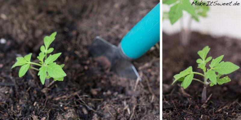 real mein kleiner bio garten Tomate einpflanzen umtopfen Sommerzeit ist Balkonzeit meinkleinergarten